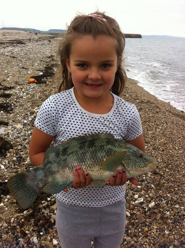A cracking Ballan Wrasse for 6yr old Willow