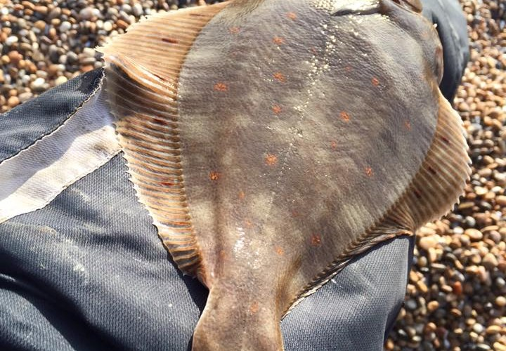 Plaice first of the year chesil