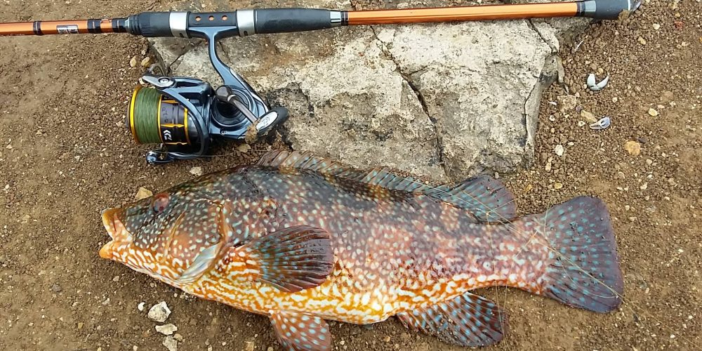 Lure Wrasse