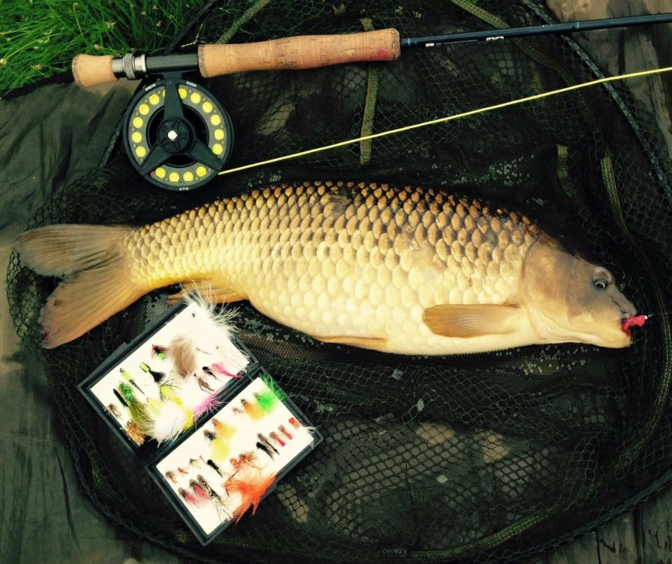 A nice Common Carp taken on a 'retrieved' Pink Fritz Fly !