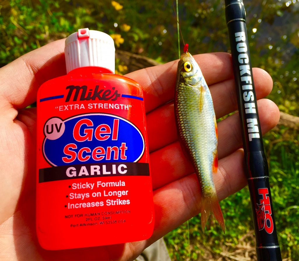 Adding a smear of Gel scent to the Lure adds that little bit of extra attraction!