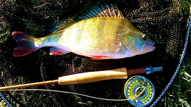 Fly fishing, Perch and Eternal Youth | | Fishing Tails