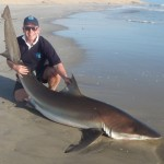Bronze Whaler Shark fishing Namibia
